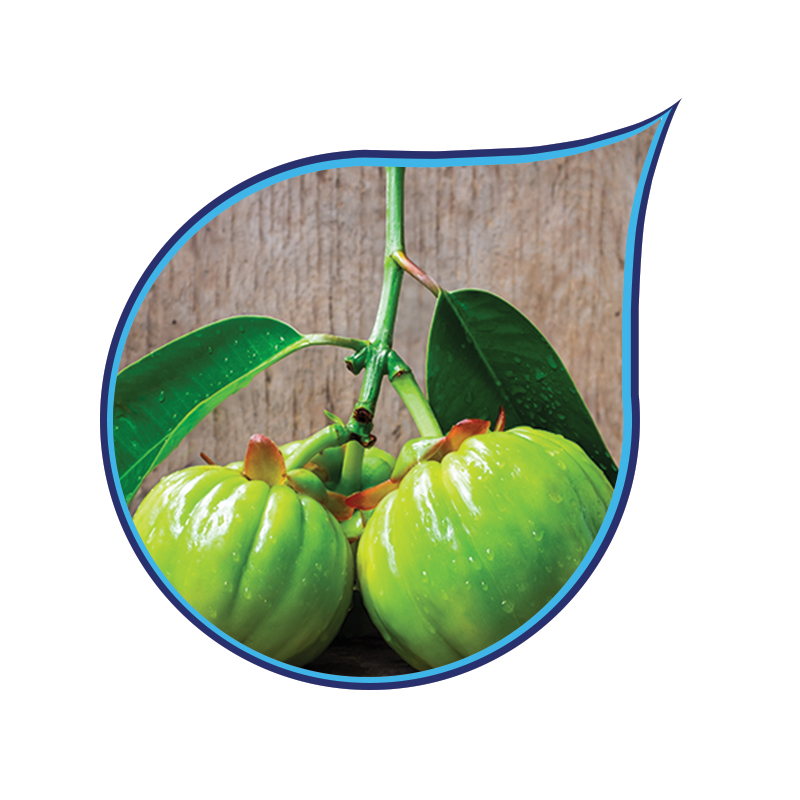 Garcinia Cambogia Extract and Powder